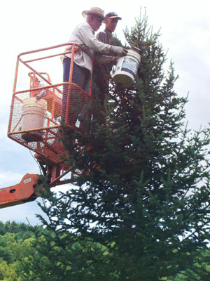 Bob and Chris harvest seed from their Canaan Fir Seed Orchard located in Petersburg, Pennsylvania